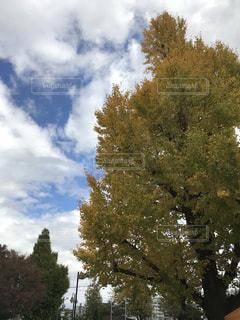 近くの木のアップの写真・画像素材[875703]