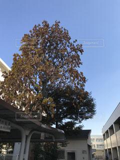 背景の木と家の写真・画像素材[886813]