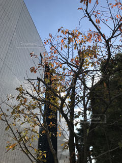 背の高い木の写真・画像素材[886814]