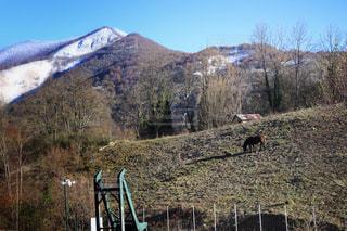 背景の山のフィールド - No.869398