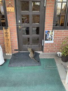 順番待ちの猫の写真・画像素材[4383285]