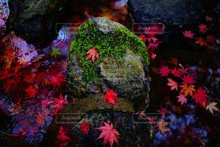 静と秋の写真・画像素材[869484]