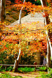 フォレスト内のツリーの写真・画像素材[888854]