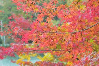 近くの木のアップの写真・画像素材[869743]