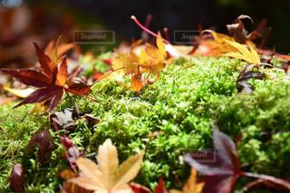 近くの植物のアップの写真・画像素材[870059]