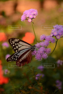 近くの花のアップの写真・画像素材[870086]