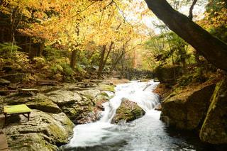 森の中の滝の写真・画像素材[870097]