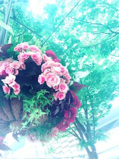花,ピンク,横浜,flower,寄せ植え,pink