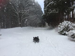 雪で覆われている犬の写真・画像素材[894450]