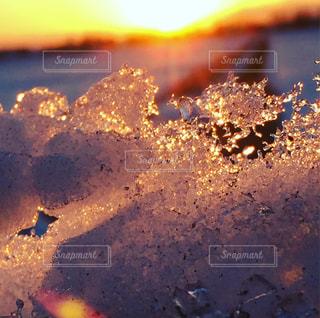 近くに夕日のアップの写真・画像素材[980981]