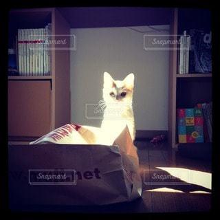 猫の写真・画像素材[29520]