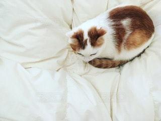 猫の写真・画像素材[40147]