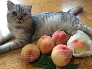 ももと猫の写真・画像素材[871237]
