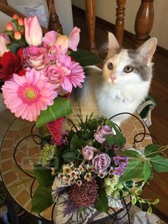 テーブルの上の花の花瓶の横に座っている猫の写真・画像素材[871244]