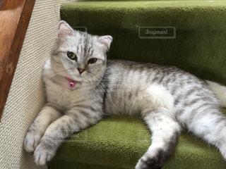 椅子に座って猫の写真・画像素材[873667]