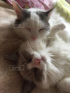 近くの白い背景の上に横たわる猫の写真・画像素材[897298]