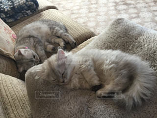 ベッドの上で横になっている猫の写真・画像素材[1215447]