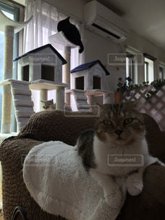 猫,お部屋,かわいい,キャットタワー,ゆっくり