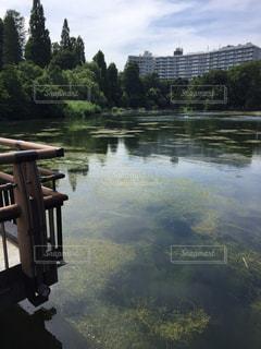 モネの池のような、都内の池です。の写真・画像素材[2250665]