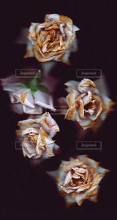 バラの花,美しい風景、綺麗な花、素敵な花、美しい花,綺麗な場所、素敵な場所、美しい風景