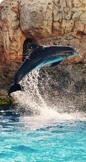 イルカ,綺麗な風景、素敵な風景、美しい風景