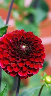 花,綺麗な花、素敵な花、美しい花,素敵な場所、美しい場所、綺麗な風景