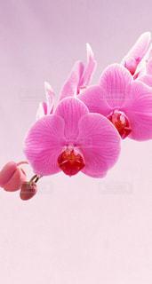 花,綺麗な花、素敵な花、美しい花