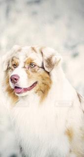 犬,可愛い犬、素敵な風景