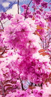 花,綺麗な花、素敵な花、美しい花,綺麗な場所、素敵な場所、美しい風景