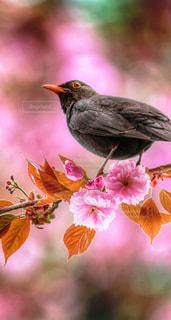 美しい,花と鳥,綺麗な場所、素敵な場所、美しい風景