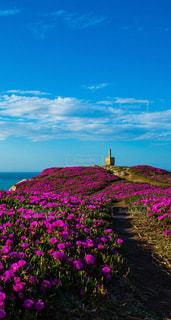花,美しい,綺麗な花、素敵な花、美しい花,素敵な場所、美しい場所、綺麗な風景