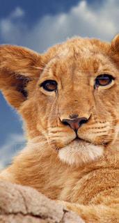 動物,可愛い動物