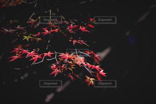 近くの花のアップ - No.871993