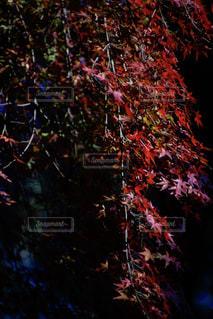 近くの木のアップ - No.875095