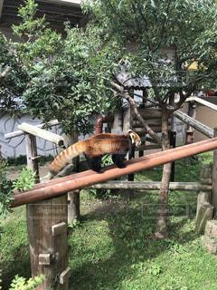 動物園,休日