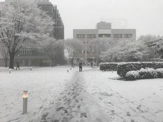 冬,雪,屋外,白,曇り,ホワイト,四季