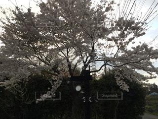 近くの木のアップ - No.880836