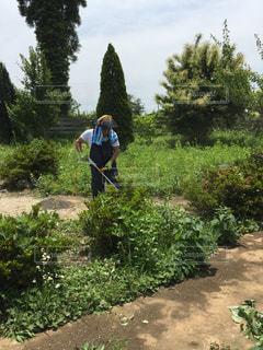 空,夏,庭,屋外,晴天,休日,草刈り,草刈り機