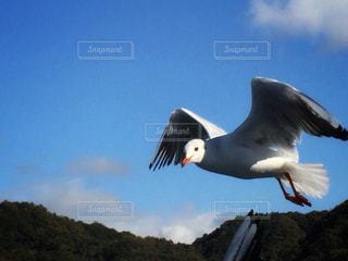 空を飛んでいる鳥の写真・画像素材[1111562]