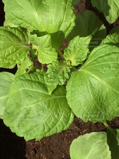 近くの緑の植物を - No.1161875