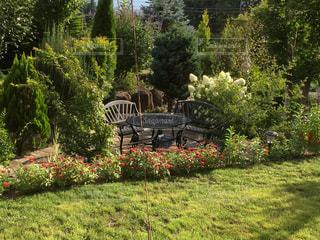 庭の植物 - No.1169585