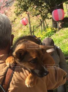 犬を持っている人の写真・画像素材[1187141]