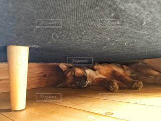 木製テーブルの上に横になっている猫の写真・画像素材[1218007]