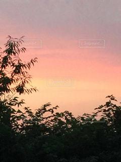 空,木,屋外,夕焼け,夕暮れ,林,樹木,夕陽,オレンジ色,グラデーション