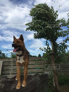 ベンチに座っている犬の写真・画像素材[1271961]