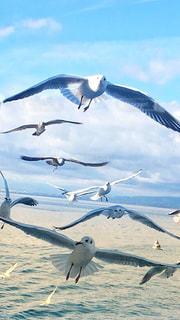 水の体の上を飛んでカモメの群れの写真・画像素材[1314305]