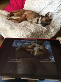 ベッドの上に横たわる犬の写真・画像素材[1464784]