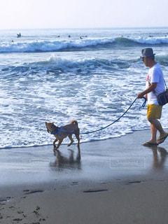 男性,犬,海,夏,ビーチ,砂浜,波打ち際,波,散歩,男,人物,人,60代,早朝,愛犬,千葉,一宮海岸,夫,チャオ