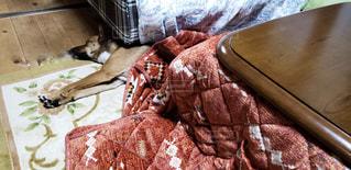 ベッドの上に横たわる犬の写真・画像素材[1744503]
