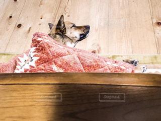 木製テーブルの上に横たわっている犬の写真・画像素材[1765042]